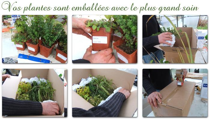 emballage plante aromatiques