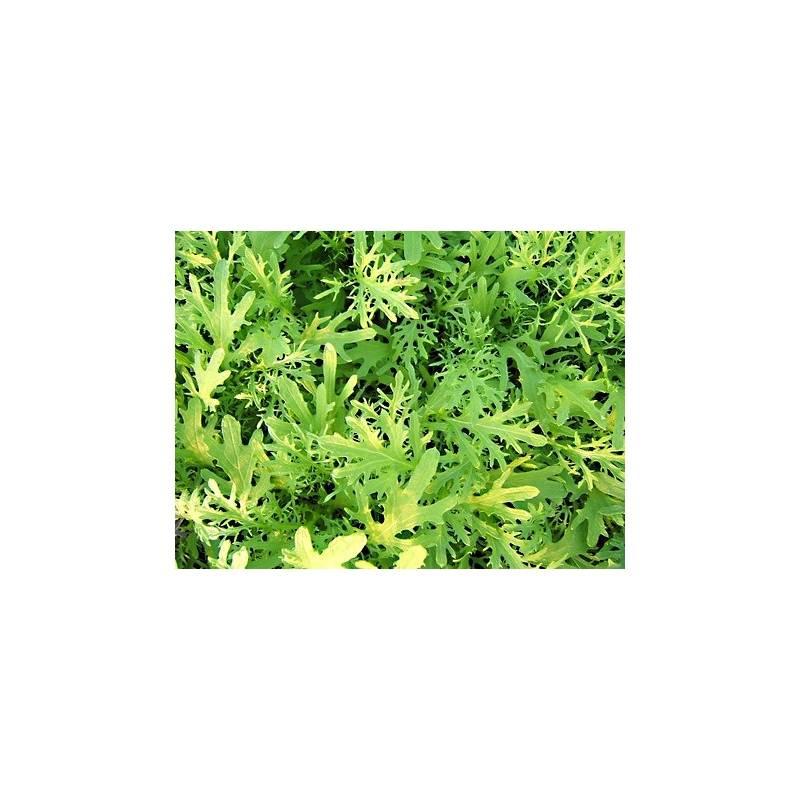 Moutarde verte feuilles d coup es en pot pepiniere en for Plantes vertes en ligne