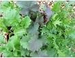 1er assortiment de 3 plantes pour vos salades