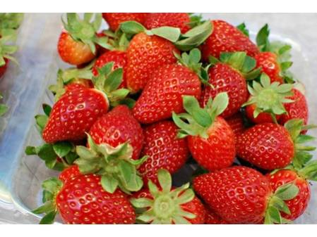 fraisiers magnum en pot plant fruit. Black Bedroom Furniture Sets. Home Design Ideas