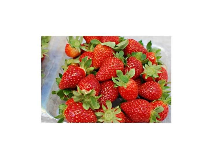 comment faire pousser un fraisier a partir dune fraise des fraisiers mis en place dans des. Black Bedroom Furniture Sets. Home Design Ideas