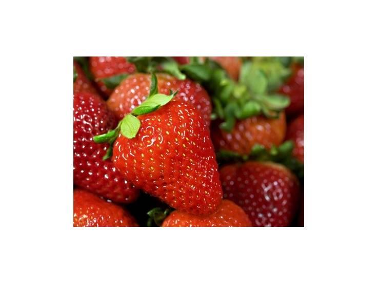 Fraisier non remontant Manon des fraises