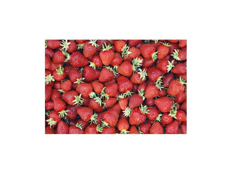 fraisiers guariguette en pot plant fruit. Black Bedroom Furniture Sets. Home Design Ideas