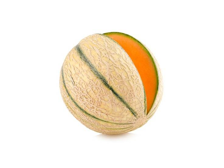 Melon charentais Troubadour